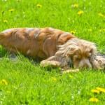 2017-04-19-gerjon-honden-25_1-640x427