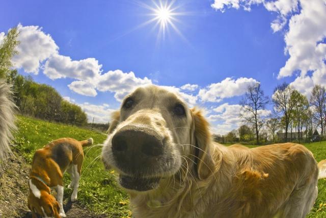 2017-04-19-gerjon-honden-43_1-640x427
